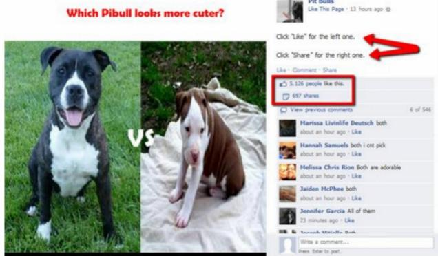 Which Pitbull?